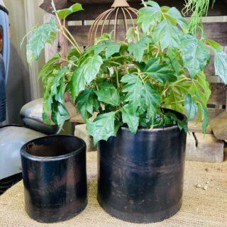 planter015